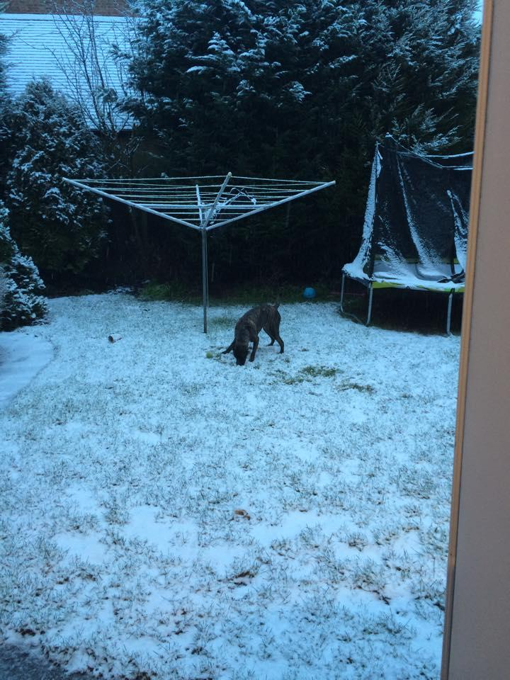 IN PICTURES: Snow in south east London and north Kent (From News ...